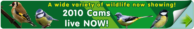 Our 2010 bird cams are now live. We are currently capturing live footage of our Sparrowhawk's, Goldfinch, Blackbird, Blue Tit, Great Tit, Mallard and Grey Wagtail.