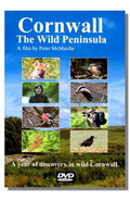 Cornwall - The Wild Peninsula
