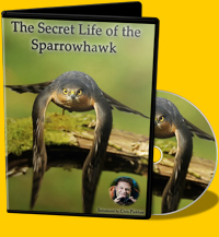 The Secret Life of the Sparrowhawk - The film covers the lives of sparrowhawks throughout the year from November to August when all adult and juvenile sparrowhawks disperse and covers why up to 19 species of songbird choose to nest right next to it.