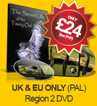 The Secret Life of the Sparrowhawk and The Secret Life of the Tawny Owl - Double DVD (UK & EUR PAL - Region 2)