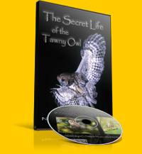 The Secret Life of the Tawny Owl
